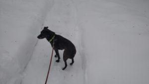 sadie-in-winter