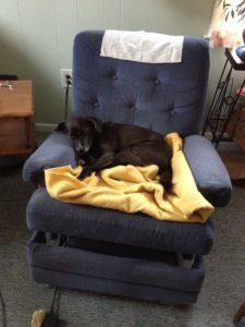 sadie-on-the-blanket